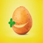 La pomme de terre, un pur morceau de bonheur.