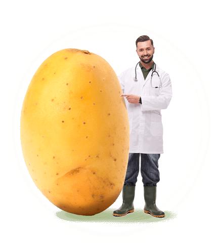 Les bienfaits des pommes de terre
