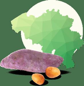 La spécificité régionale ou la forme de la pomme de terre